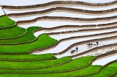image of yen  - Terraced rice fields  - JPG