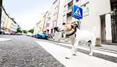 Dog And Owner  With Leash Crossing Street poster