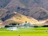 Irrigating lush farm pastures in central Otago, NZ