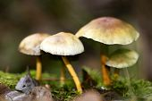 Trippy Mushrooms Close Up In Wild Nature Background Fifty Megapixels poster