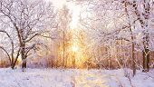 Beautiful Snowy Winter Landscape Panorama With Forest And Sun. Winter Sunset In Forest Panoramic Vie poster
