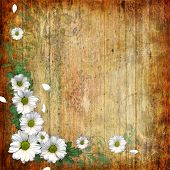 Grunge Abstract Background With Chamomile