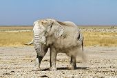 Namibia Dust Elephant