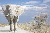 Estrada de elefante