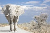 Elephant Road