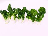 Bunch Of Fresh Baby Bok Choy, Brassica Rapa Chinensis,  Isolated On White Background