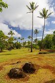 Red Soil With Coconut Trees