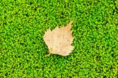 Green Moss And A Tiny Leaf