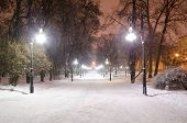 Alley In The Park Of The Icy Trees Lighted Street Lamps