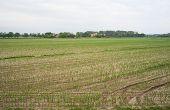 Field Of Cornfield