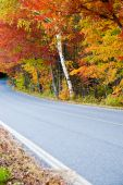 Country Road With Autumn Foliage