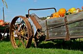 Autumn pumpkins displayed in an old manure spreader