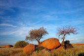 Landscape with granite boulders, trees and blue sky, Namibia, southern Africa