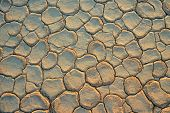 Cracked mud at the onset of a drought