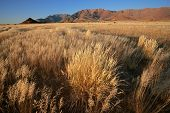 Grassland landscape at sunrise, Brandberg mountain, Namibia, southern Africa