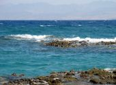 Coastal Reeves On Red Sea Egypt