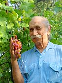 Happy Elderly Man Holds A Ripe Grape.