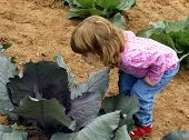 Child In Cabbage Patch