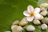 Pile of stones with frangipani on banana leaf
