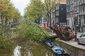 AMSTERDAM, THE NETHERLANDS - OCTOBER 28, 2013: Fallen tree lies in the canal at Leidsegracht  in Ams