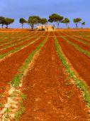 Mediterranean Countryside