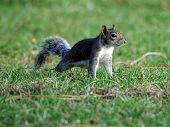 Squirrel - On Your Mark