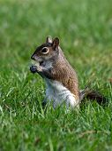 Squirrel - Take a Bite
