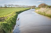 Meandering Stream In A Dutch Landscape