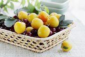 cherry with plum