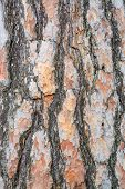 Bark Texture Background Scots Pine