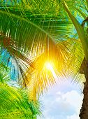 Fresh green palm tree leaves, bright yellow sun light through exotic foliage, beauty of tropical nat