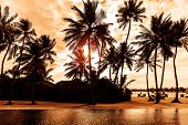 Tropical beach on sunset, beautiful postcard with palm trees silhouette on cloudy sky background, luxury summer vacation concept