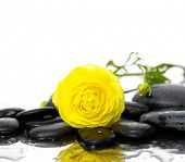 still life with pebbles and yellow ranunculus flower