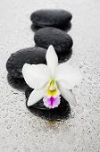 Macro of white orchid flower with black stones