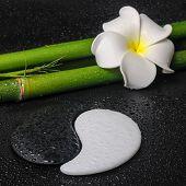 Spa Concept Of Tropical Frangipani Flower, Symbol Yin Yang And Natural Bamboo On Zen Basalt Stones W