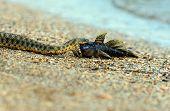 Water Snake