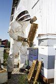 Beekeeper Holding Hive