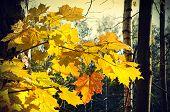 Beautiful Autumn Branch Of Maple Tree