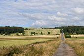 Tracks In The Cornfield