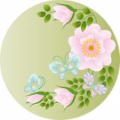 Wild Rose And Butterflies