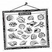 monochrome seashells set in a wooden frame