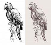 original artwork parrot, black sketch drawing bird