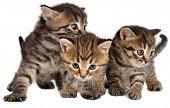 Group Of Little Kittens On White