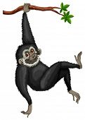 Illustration of a black gibbon hanging