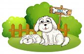 Illustration of a backyard with two cute dogs on a white background