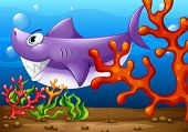 Illustration of a big fish under the sea