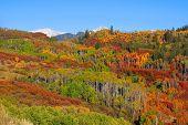 Colorful autumn splendor in rocky mountains of Colorado