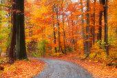 Scenic road through bright autumn trees
