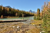 Golden Larch Trees And Cascade Lakes, Yoho