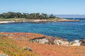 Succulents on the coast of Monterey, California
